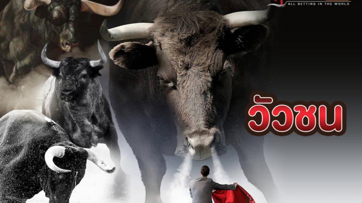 เดิมพัน วัวชนออนไลน์ คาสิโนที่เปี่ยมไปด้วยกำไรอันล้นหลาม